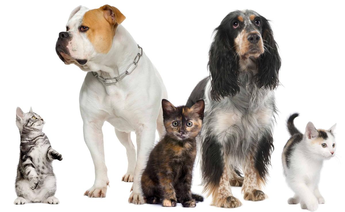castellazzo-farmacia-veterinaria